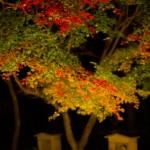紅葉の色づきをライトアップ